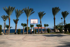 Basketball backboard in the palms Royalty Free Stock Images