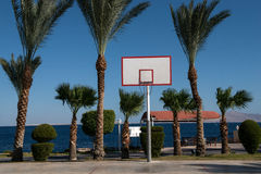 Basketball backboard in the palms Stock Photography