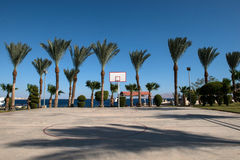 Basketball backboard in the palms Stock Image