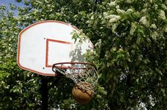 Basketball.Backboard, sand Blossoms of Spring Royalty Free Stock Image