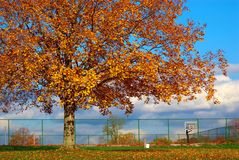 The Basketball Court Stock Photography