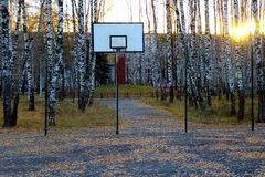 Basketball court in a birch grove. Stock Photography
