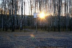 Basketball court in a birch grove. Royalty Free Stock Photos