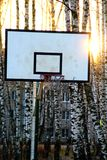 Basketball court in a birch grove. Royalty Free Stock Photography