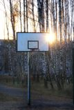 Basketball court in a birch grove. Stock Photos