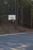 Basketball in a forest Stock Image