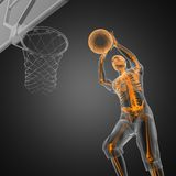 Basketball game player Stock Photos