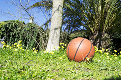 Basketball in the garden Royalty Free Stock Image
