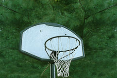 Basketball Goal With Pine Tree Background Stock Photography