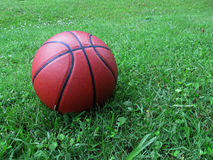 basketball green grass royalty free stock photography