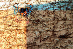 Basketball hoop with climbing plant. In autumn Stock Photography