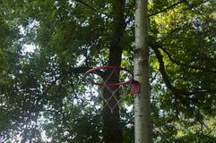 Basketballkorb auf einem Baumstamm Lizenzfreies Stockbild