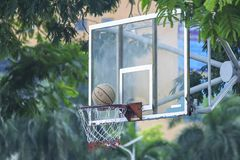 Basketballkorb nahe dem Baum lizenzfreie stockfotos