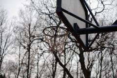 Basketbalmand in het hout Stock Afbeeldingen