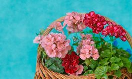 Basketful των λουλουδιών Στοκ εικόνες με δικαίωμα ελεύθερης χρήσης