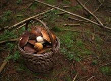 Basketful грибов Стоковые Изображения RF