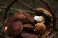 Basketful грибов Стоковая Фотография RF