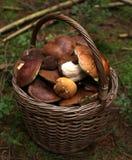 Basketful грибов Стоковые Фотографии RF