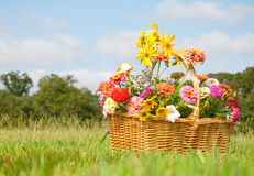 Basketful of colorful flowers on a grassy field Royalty Free Stock Photography