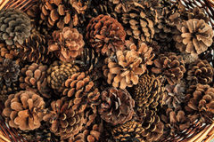Basketful of pine cones Royalty Free Stock Image