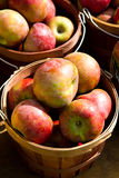 Baskets of apples Royalty Free Stock Photo