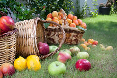 Baskets of apples on lawn Stock Photos