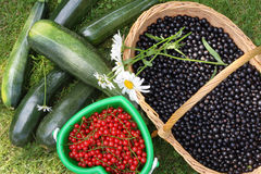 Baskets with berries Royalty Free Stock Photo