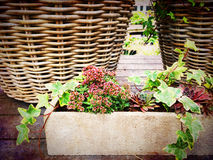 Baskets and blooming plants, garden decoration Royalty Free Stock Photography