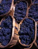 Baskets with blue grapes stock images