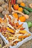 Baskets of corn and pumkins Stock Photography