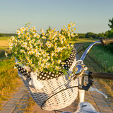 Baskets with daisies at sunset Royalty Free Stock Photography