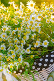 Baskets with daisies at sunset Stock Image