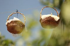 Baskets with dried apricots hanging stock photo