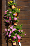 Baskets flowers Stock Images