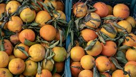 Baskets of Fresh Oranges. Near Naples, Italy royalty free stock images