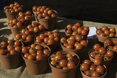 Baskets of fresh red cherry tomatoes for sale at the market. Sitting on a table covered with beige burlap Stock Photo
