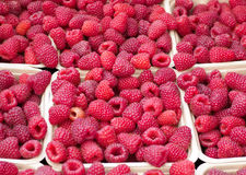 Baskets of Fresh Ripe Raspberries at the Market. Baskets of Fresh Ripe Raspberries for sale at the local summer farmers Market Royalty Free Stock Photo
