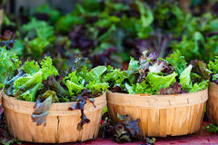 Baskets of fresh salad in farmer market Royalty Free Stock Photos