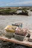 Baskets full with oysters on the beach of Cancale stock photography