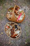 Baskets full of various kinds of mushrooms in a forest Royalty Free Stock Photos