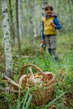 Baskets full of various kinds of mushrooms in a forest Stock Photos