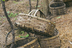 Baskets for grape harvest Royalty Free Stock Images