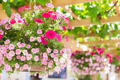 Baskets in a hanging flower garden on a sunny day. stock photos