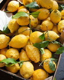 Baskets with lemons in outdoors market of Sorrento. Italy royalty free stock photo