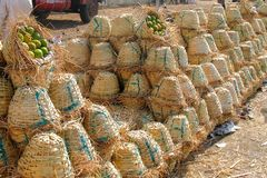 Baskets of Mangoes for sale. Stock Images