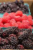 Baskets of Marionberries and Red Raspberries. Baskets of fresh Marionberries and Red Raspberries on display Royalty Free Stock Photo
