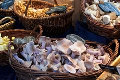 Baskets of mushrooms for sale at a market stock images