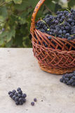 Baskets with nature grapes Royalty Free Stock Image
