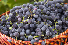 Baskets with nature grapes Royalty Free Stock Photo