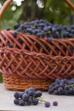 Baskets with nature grapes Stock Photography